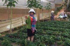 Đầu năm, nhiều du khách sập bẫy 'vườn dâu miễn phí' ở Đà Lạt