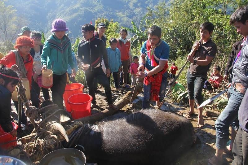 Điều đặc biệt trong lễ đâm trâu ở Quảng Nam