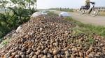 5 loài bị cấm, người Việt vẫn nuôi và mua bán