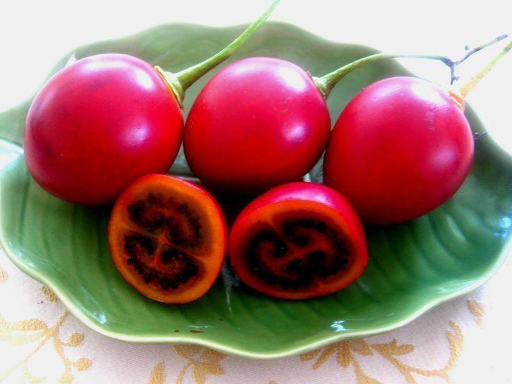 cà chua lạ, cà chua thân gỗ, cà chua Tamarillo, cà chua Ecuador, xếp hàng mua cà chua, cà chua