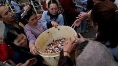 10 tấn cá phóng sinh không phải loài nguy hại