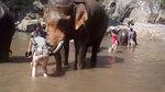 10 clip 'nóng': Cô gái xinh đẹp bị voi húc tung lên không trung