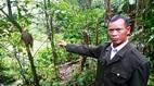 Kỳ lạ khu rừng cất giữ rốn của người Xê Đăng