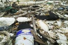 Dầu vón cục xuất hiện bất thường trên bờ biển Quảng Nam
