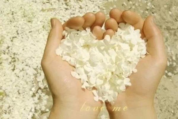 Valentine, tình yêu, cô gái yêu, nói lời yêu