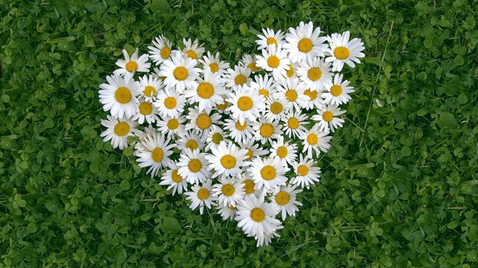 Ý nghĩa các loài hoa cho ngày Valentine không phải ai cũng biết