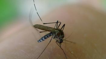 Mẹo đơn giản đuổi sạch muỗi không cần thuốc xịt