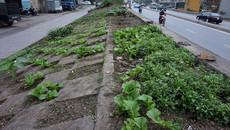 Phản hồi mới của Bộ Nông nghiệp về đề xuất hạ đê sông Hồng