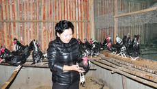 Trang trại chim quý của nữ tỷ phú Tuyên Quang
