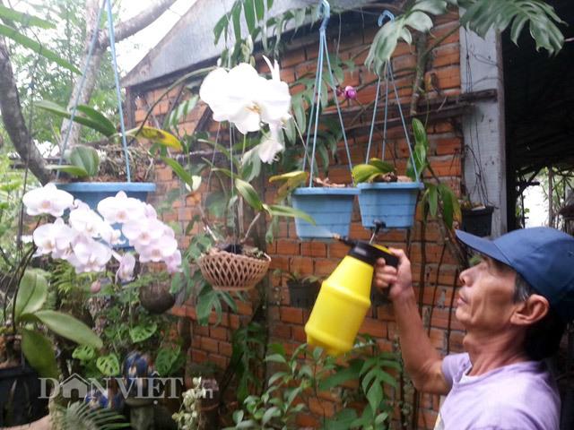 Chiêu lạ: Dùng bia để tưới cây, bón nấm ở Phú Yên - ảnh 2
