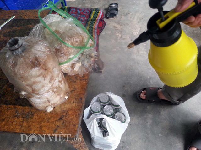 Chiêu lạ: Dùng bia để tưới cây, bón nấm ở Phú Yên - ảnh 3