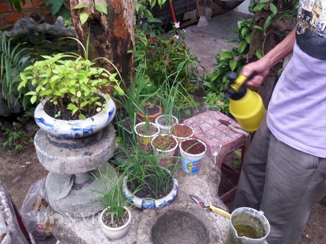Chiêu lạ: Dùng bia để tưới cây, bón nấm ở Phú Yên - ảnh 5
