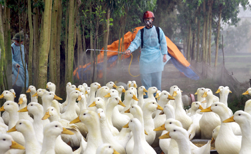 Cúm gia cầm, cúm h7n9, h7n9, cúm H5n1, H5N1, cúm lây từ gia cầm sang người, gia cầm nhập lậu