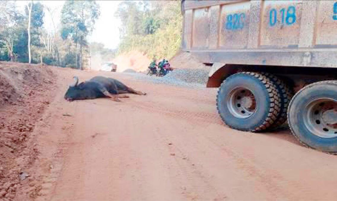 Hy hữu: Bò tót trong Vườn Quốc gia lao vào đầu xe tải