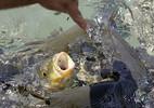 Nữ du khách bị bắt vì cho cá ăn không đúng chỗ