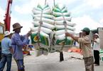 Xin giấy phép xuất khẩu gạo tốn hơn 20 ngàn USD