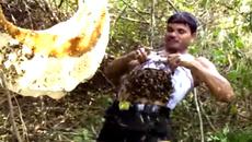 Bốc hàng nghìn con ong thả vào áo ngực, người xem kinh ngạc
