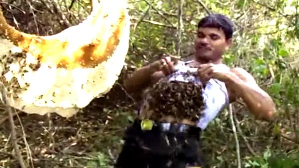 [VietnamNet.vn] 10 clip 'nóng': Bốc hàng nghìn con ong thả vào áo ngực