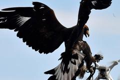 Pháp huấn luyện đại bàng chuyên hạ flycam trái phép