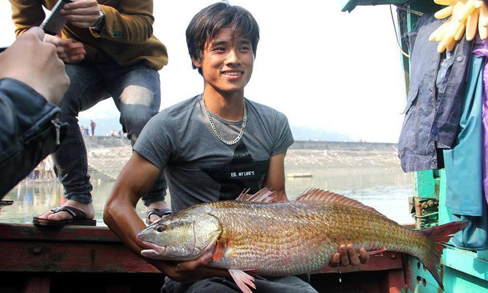 Cá sủ vàng, cá sủ vàng quý hiếm