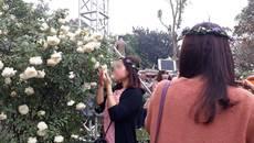 Lễ hội hoa: Hồng gãy cành, tơi tả vì khách chen nhau 'tự sướng'