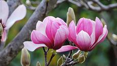 Loại hoa quen thuộc chữa tận gốc viêm xoang
