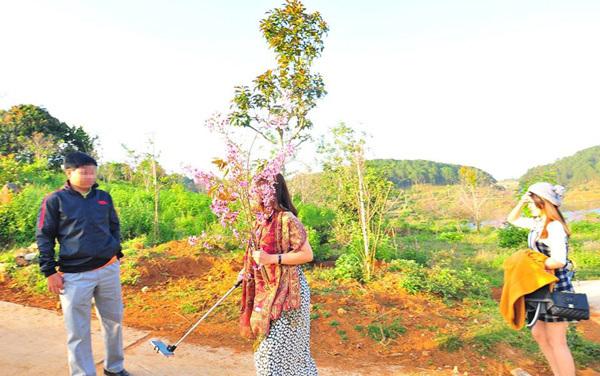 nữ phó đốc sở bẻ hoa, Phạm Thị Minh Hiếu, bẻ hoa, nữ phó giám đốc, du khách