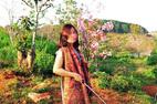 Nữ Phó giám đốc sở giải trình vụ bẻ hoa anh đào