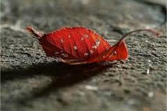 Mặc mưa đời ướt mi