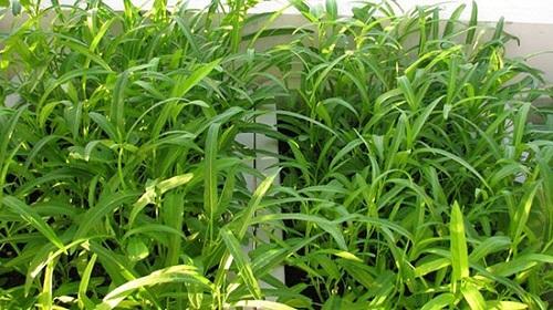 6 loại rau trồng thùng xốp tháng 3 để 'hợp thời', ăn mãi không hết