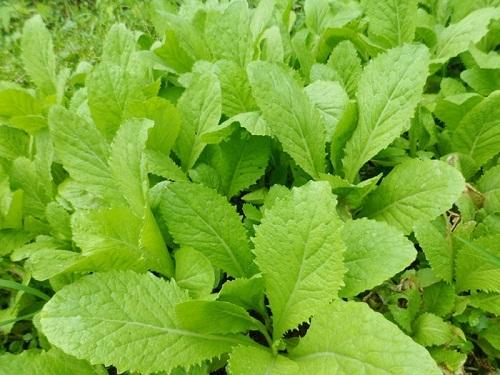 trồng rau sạch, trồng rau thùng xốp, thời tiết tháng 3