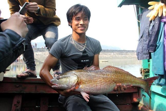 Nghệ An: Cá sủ được hỏi mua gần 1 tỷ, nay bán 15 triệu
