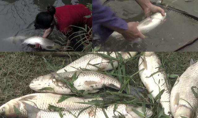 Vỡ hồ chứa bùn thải quặng, cá chết hàng loạt