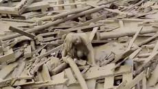 Video người phụ nữ hoảng loạn thoát 'lưới hái tử thần' trong trận lở đất