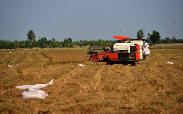 Thủ tướng Nguyễn Xuân Phúc, gỡ bỏ hạn điền, Đồng bằng sông Cửu Long, xuất khẩu gạo