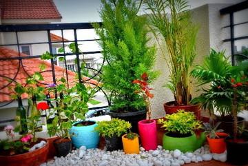 Không gian sống đẹp tinh tế và trong lành nhờ khéo trang trí với cây xanh