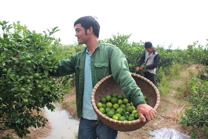 cử nhân ngoại thương, khởi nghiệp, thực phẩm sạch, nông nghiệp công nghệ cao
