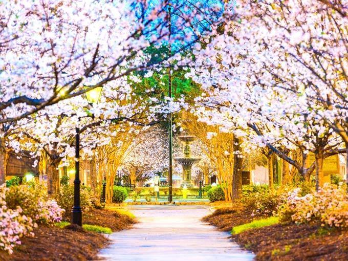 Đẹp hút hồn sắc hoa anh đào nở rộ khắp thế giới - ảnh 4