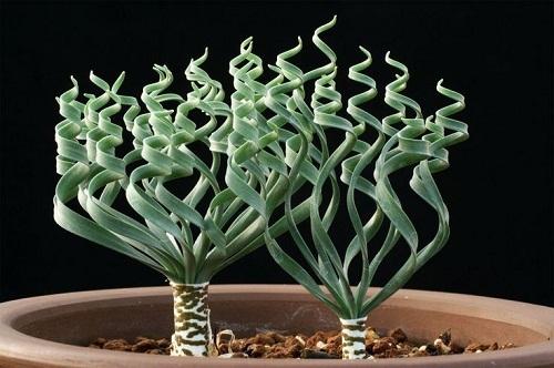 cây cảnh mini, trồng cây trong nhà, trang trí nhà với cây xanh