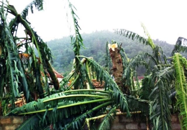 mưa đá, giông lốc, Thanh Hóa