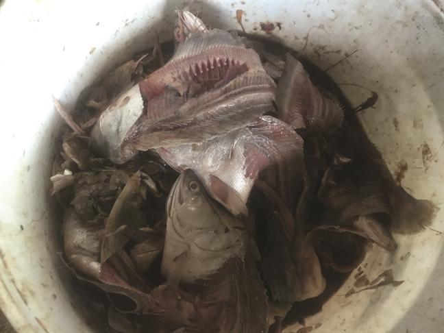 Đột nhập 'công xưởng' biến cá thối thành... đặc sản