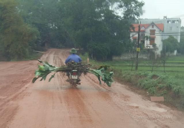 Xe máy cưỡi bò, người ngồi lên lợn