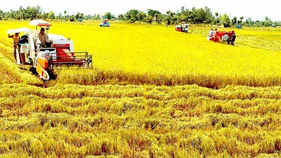 lúa gạo, hạn điền, Thủ tướng Nguyễn Xuân Phúc, xuất khẩu gạo