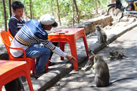 Bầy khỉ 60 con nương nhờ cửa phật ở Vũng Tàu - ảnh 1
