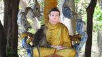 Kỳ lạ ngôi chùa có bầy khỉ 60 con trú ngụ, rong chơi