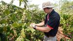Nhà đầu tư dồn công lực cho chất lượng cà phê Việt