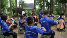 Xem dàn nhạc giao hưởng trẻ em khiếm thị biểu diễn