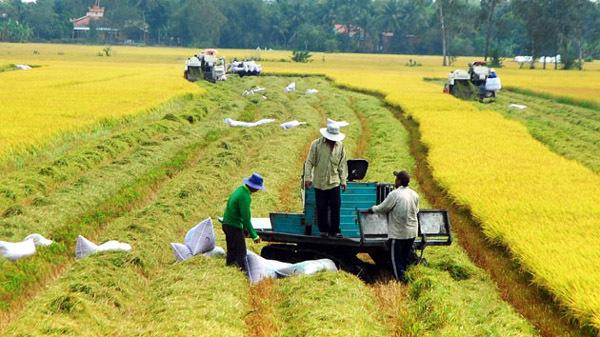 lúa gạo, xuất khẩu gạo, mở rộng hạn điền, TS Đặng Kim Sơn