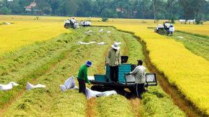 Mở rộng hạn điền: Cơ hội đề người nông dân làm giàu trên cánh đồng của mình