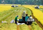 Cơ hội để người nông dân làm giàu trên cánh đồng của mình